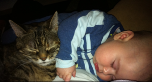 Cat with little boy