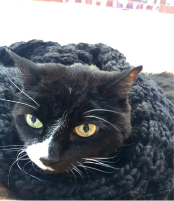Cat wrapped in a scarf