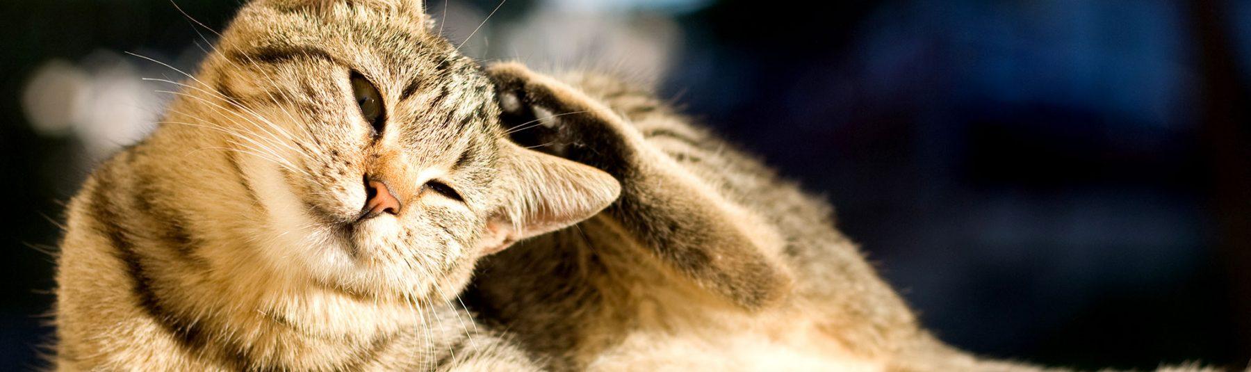 cat-services