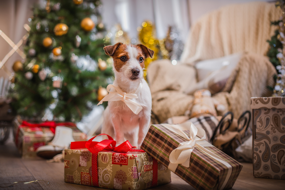 Dog surrounded by gifts and a Christmas tree