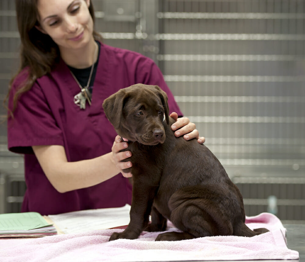 Veterinary staff with a puppy